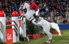 Проведение конных соревнований