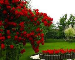 Selection of plants for flower beds