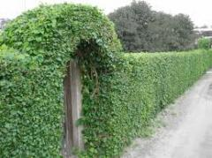 Landing of green hedges