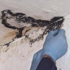 Removal of a mold on sites of houses