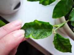 Disinfection of plants