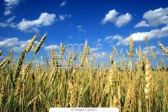 Agricultural credi