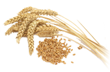 Производство пшеничной муки в Азербайджане