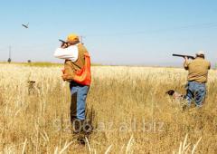 Охотничий туризм