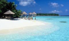 Maldiv Turu