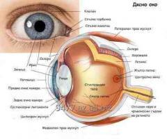 Göz dibinin müayinəsi azerbaycanda Bioloji üsulla