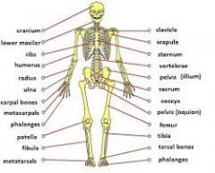 Sümük metabolizmin müainəsi azerbaycanda.