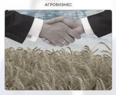 Подготовка бизнес-планов для агробизнеса.