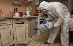 Дератизация это эффективный метод для истребление грызунов