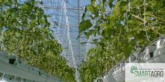 Агрономическая поддержка владельцев фермерских и тепличных хозяйств