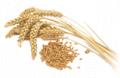 Production of wheat flour in Azerbaijan